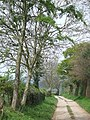 Byway near Quatt, Shropshire - geograph.org.uk - 403867.jpg
