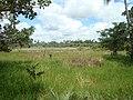 Córrego da Viúva - panoramio.jpg