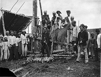 Sumatran tiger - Group of people at a tiger trap with a tiger in Soepajang, Bovenlanden Padang, on Sumatra's west coast (Circa 1895)