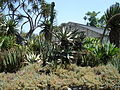 Cactus & Succulents (183436548).jpg