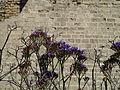 Caesarea Maritima - City Walls P1100154.JPG