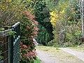 Callelochan driveway - geograph.org.uk - 428832.jpg