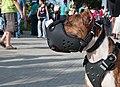 Caminata por los perros y animales Maracaibo 2012 (23).jpg