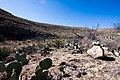 Carlsbad Caverns National Park and White's City, New Mexico, USA - 48344714941.jpg