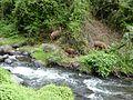 Cascada de Peguche Ecuador672.jpg