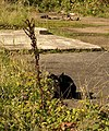Cat, Norton Fitzwarren - geograph.org.uk - 1002541.jpg