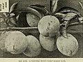 Catalogue for fall 1900 (1900) (20557300985).jpg