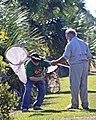 Catch To Tag Monarch Butterflys By Joody Moates.jpg