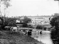 Cattle in a river with houses in the background