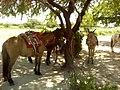 Cavalgada do Barreiro da Palha - panoramio.jpg