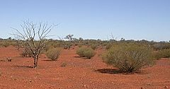 Typical desert landscape north of Coober Pedy.