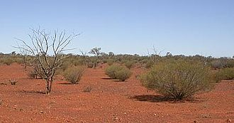 Climate of Australia - Typical desert landscape north of Coober Pedy
