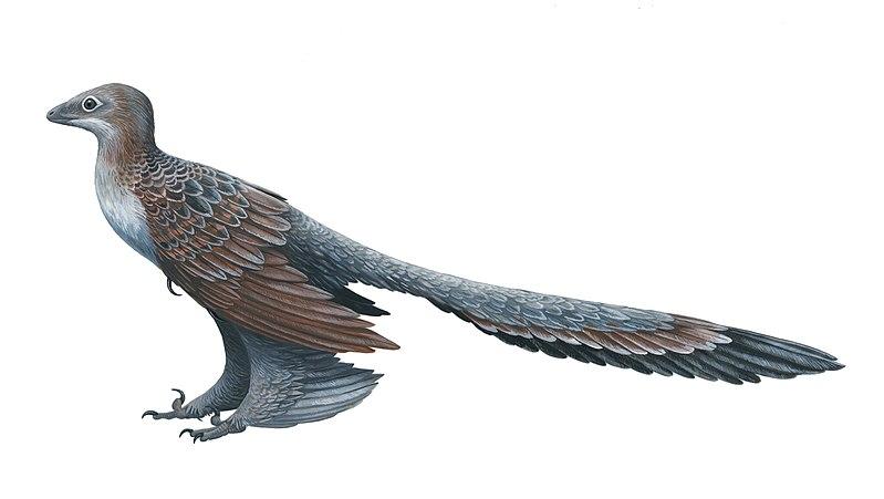 File:Changyuraptor.jpg