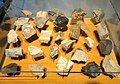 Chert specimens from Indiana - Indiana State Museum - DSC00398.JPG