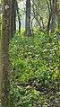 Chitwan Jungle.jpg
