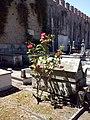 Cimiterio ebraico di pisa 2014 05.jpg