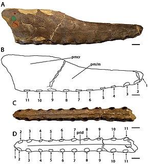 <i>Cimoliopterus</i> genus of reptiles (fossil)