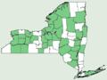 Cirsium vulgare NY-dist-map.png