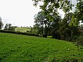 Clover field, Aber-Cefel, Llandysul - geograph.org.uk - 998093.jpg