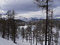 Col du Lin's forest - panoramio.jpg