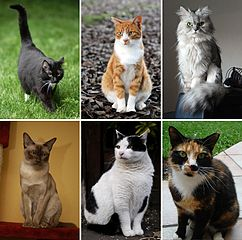 Montaje de seis fotos de gato