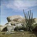 Collectie Nationaal Museum van Wereldculturen TM-20029511 Dolomieten met cactus Aruba Boy Lawson (Fotograaf).jpg