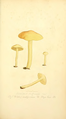 Coloured Figures of English Fungi or Mushrooms - t. 44.png