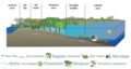 Conceptual diagrams of estuarine vegetation.png