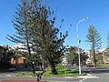 Coolangatta Boundary St trees.jpg