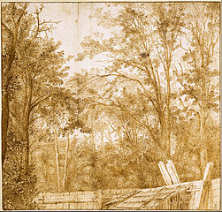 Trees behind a Wooden Fence