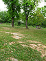 Costigiola-radura roverelle-2.jpg
