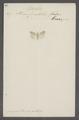 Crambus - Print - Iconographia Zoologica - Special Collections University of Amsterdam - UBAINV0274 058 03 0002.tif