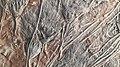 Crinoidea Devonian Merzouga-Maroc MuseeCantonalDeGeologie-Lausanne RomanDeckert20210424.jpg