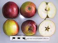 Cross section of Directeur van de Plassche, National Fruit Collection (acc. 1955-014).jpg