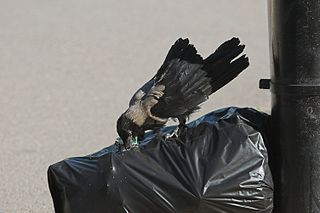Opening garbage bag