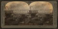 Crude oil stills and can factory, Port Arthur Texas, U.S.A., by Keystone View Company.png