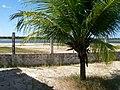 Cruz, State of Ceará, Brazil - panoramio.jpg
