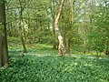 Cuerdale Wood - geograph.org.uk - 166248.jpg
