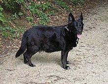 magas vérnyomás kezelése kutyáknál