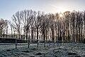 Dülmen, Kirchspiel, Leuste, Wäldchen -- 2021 -- 7604-8.jpg