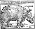 Dürer-rhino.jpg