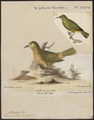 Dacnis spiza - 1700-1880 - Print - Iconographia Zoologica - Special Collections University of Amsterdam - UBA01 IZ19000395.tif