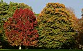 Dartington autumns colours-21.jpg