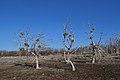 Dead trees - Tommy Thompson Park1.jpg