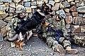Defense.gov photo essay 120527-A-PO167-039.jpg