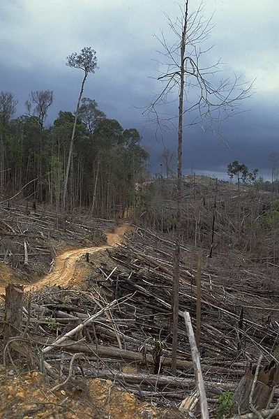 Deforestation and forest burning for oil palm plantation in the buffer zone of Bukit Tigapuluh National Park in Riau Province, Indonesia.