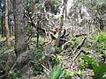 Degradação Florestal Amazônia 33.jpg