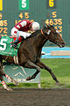 Demon Warlock wins 2004 Tribal Classic Stakes.jpg