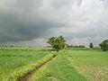 Dhaulana In Monsoon.jpg