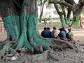 Dili Park (6395937317).jpg